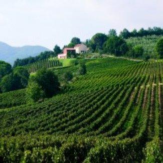 Degustazione Collemassari (Toscana)