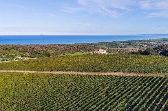 Wine Tasting Argentiera Bolgheri ( Tuscany )