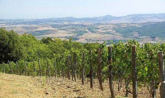 Degustazione Bellaria Assunto Montalcino ( Toscana )