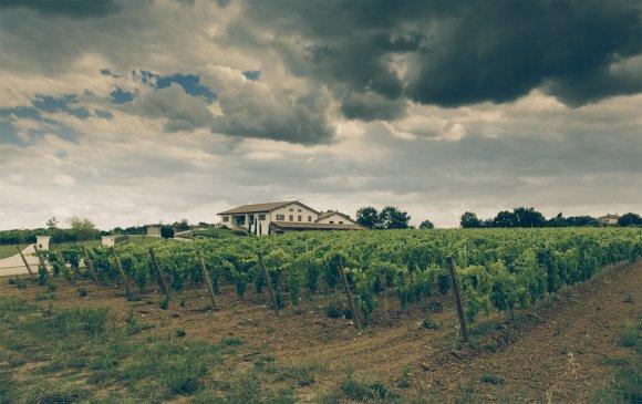 Wine Tasting Baldetti Cortona ( Toscana )