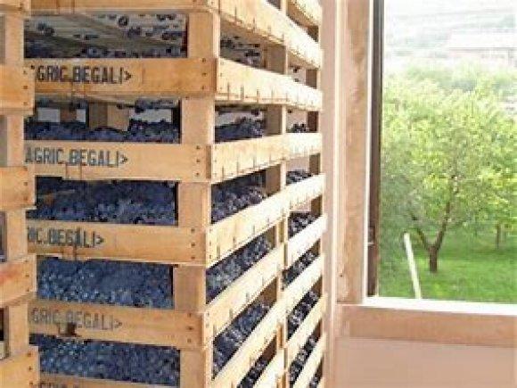 Wine Tasting Begali Valpolicella ( Veneto )