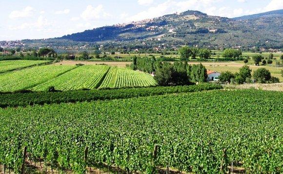 Wine Tasting Fabrizio Dionisio Cortona ( Tuscany )