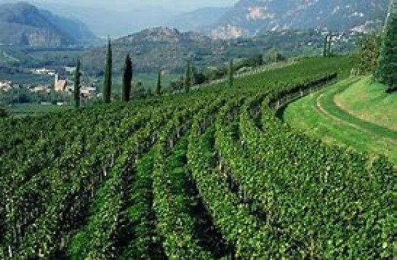 Wine Tasting Hofstatter ( Alto Adige )