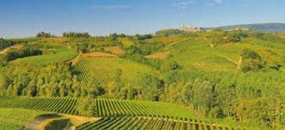 Degustazione Tenute Niccolai Montalcino (Toscana)
