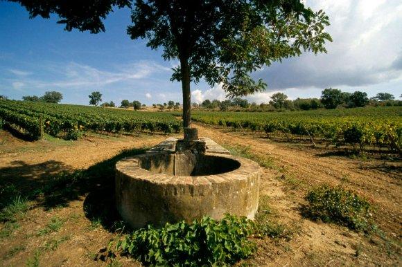 Wine Tasting Casanuova di Nittardi Chianti Classico (Tuscany)