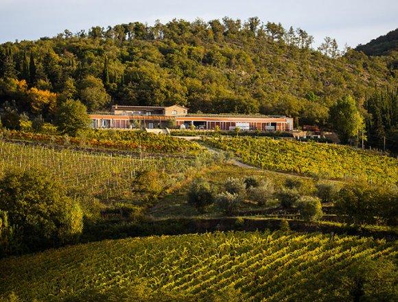 Wine Tasting Riecine Chianti Classico ( Tuscany )