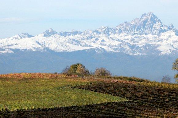 Wine Tasting Vajra Barolo ( Piedmont )